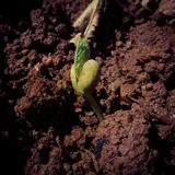 绿色新出生的新芽在强湿地 库存图片