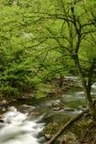 绿色新的春天 免版税库存照片