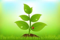 绿色新芽向量 免版税图库摄影