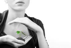 绿色新芽妇女年轻人 免版税库存图片