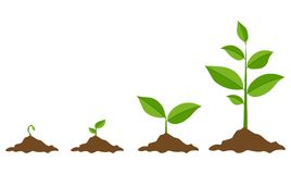 绿色新芽集合,传染媒介例证 向量例证