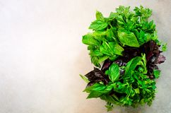 绿色新鲜的芳香草本-麝香草,蓬蒿,在灰色背景的荷兰芹 横幅拼贴画,食物框架 Copyspace 顶视图 库存图片