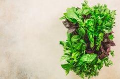 绿色新鲜的芳香草本-麝香草,蓬蒿,在灰色背景的荷兰芹 横幅拼贴画,食物框架 Copyspace 顶视图 图库摄影