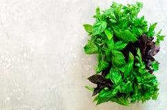 绿色新鲜的芳香草本-麝香草,蓬蒿,在灰色背景的荷兰芹 横幅拼贴画,食物框架 Copyspace 顶视图 免版税库存图片