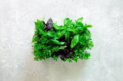 绿色新鲜的芳香草本-麝香草,蓬蒿,在灰色背景的荷兰芹 横幅拼贴画,食物框架 Copyspace 顶视图 免版税图库摄影