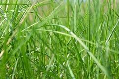 绿色新鲜的草坪-特写镜头 免版税图库摄影