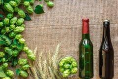 绿色新鲜的蛇麻草用麦子和两个瓶啤酒当拷贝空间构筑在麻袋布背景的正文 免版税库存照片