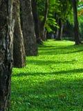 绿色方式 免版税库存照片