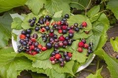 绿色无核小葡萄干叶子、草莓红色成熟莓果和草莓 一个无核小葡萄干的黑暗紫罗兰色莓果在一块白色板材的在 图库摄影