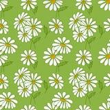 绿色无缝的雏菊模式。 免版税图库摄影