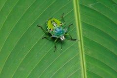 绿色昆虫 免版税图库摄影