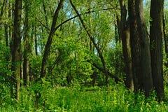 绿色春天叶子在一个森林里在Vinderhoute,富兰德 库存照片
