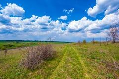 绿色春天在俄罗斯 免版税库存照片