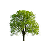 绿色春天结构树 库存照片