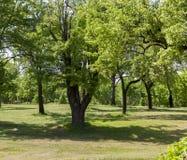 绿色木头 免版税库存照片