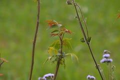 绿色木本植物在围场 免版税图库摄影