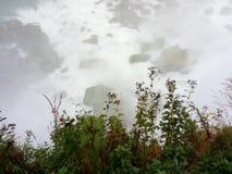 绿色杂草增长在尼亚加拉瀑布- NY -美国 免版税库存照片