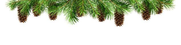绿色杉木枝杈和锥体圣诞节上面边界的 免版税库存照片