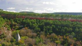 绿色杉木森林和红色落叶树 影视素材