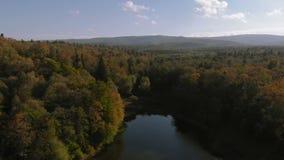 绿色杉木森林的空中射击在喀尔巴阡山脉在一好日子 股票录像