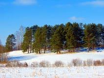 绿色杉木海岛在冬天草甸 库存照片
