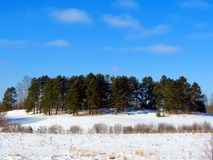 绿色杉木海岛在冬天草甸 免版税图库摄影
