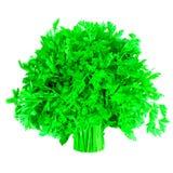 绿色束荷兰芹 免版税库存图片