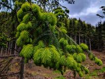 绿色枝杈 免版税库存照片