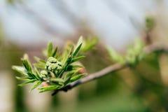 绿色枝杈 库存照片