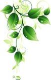 绿色枝杈 库存图片
