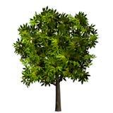 绿色查出叶子工厂结构树 免版税库存图片
