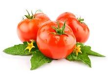 绿色查出的叶子红色蕃茄蔬菜 免版税库存照片