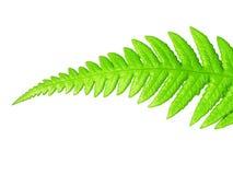 绿色查出的叶子 库存图片