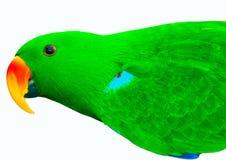 绿色查出的鹦鹉 库存图片