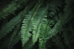 绿色查出空白的叶子 免版税库存图片