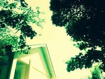 绿色树剪影房子屋顶 免版税库存照片