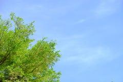 绿色树叶子和蓝天 免版税图库摄影