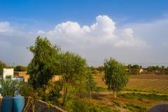 绿色树和天空蔚蓝 免版税库存照片