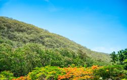 绿色树和山与蓝天,自然风景视图  图库摄影