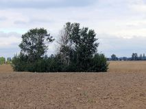 绿色树和灌木在一个被犁的棕色领域 免版税库存照片