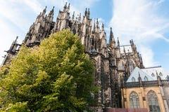 绿色树和科隆大教堂在9月 库存图片