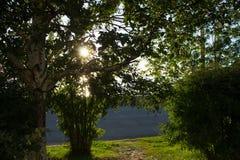 绿色树和草在堤防的一个晴天 免版税库存照片