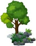 绿色树和草在岩石 免版税库存照片