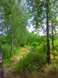 绿色树和道路照片 免版税库存图片