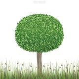 绿色树回合在自然绿色领域区域和白色背景 皇族释放例证