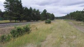 绿色树围拢的铁路路在一阴天 影视素材