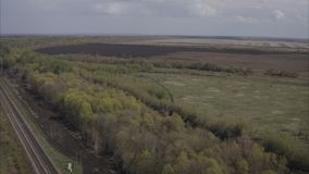 绿色树在天空蔚蓝的美丽的公园 股票视频