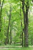 绿色树在春天公园 免版税库存图片