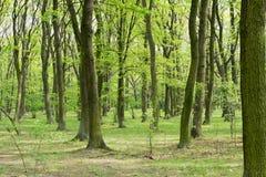 绿色树在春天公园 免版税库存照片