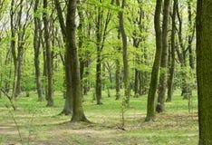 绿色树在春天公园 免版税图库摄影